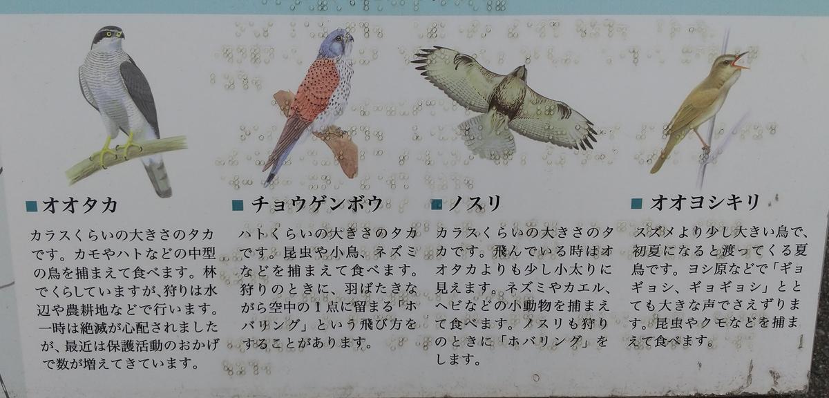 f:id:genta-san:20210605155951j:plain