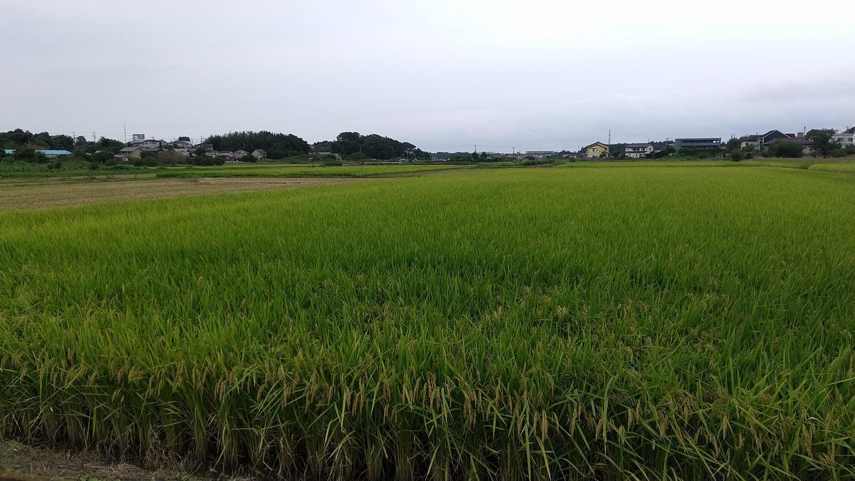 f:id:genta-san:20210914172339j:plain
