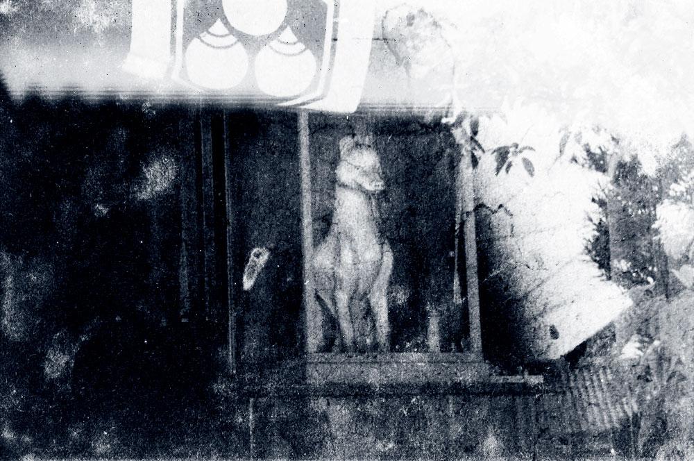 荒川亀斎の白狐