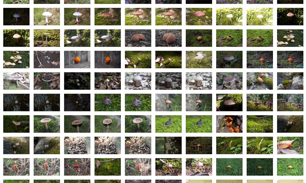 2015年に出会った菌類た