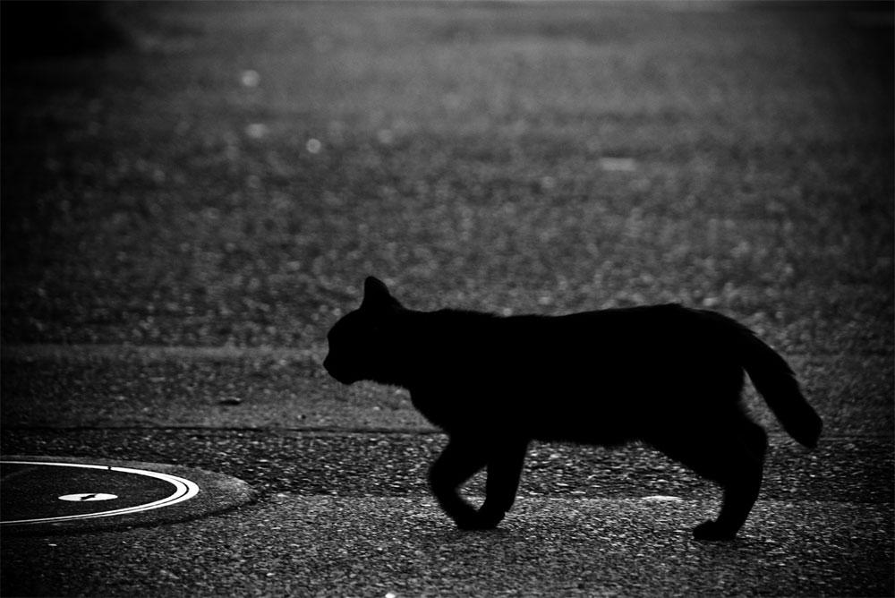 黒猫ハート