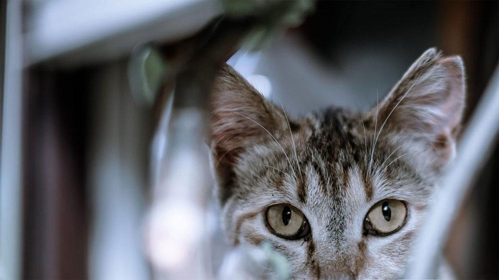 第十一話『二匹の猫』- 午前0時の、猫たちには見えている、階段の怪談 -