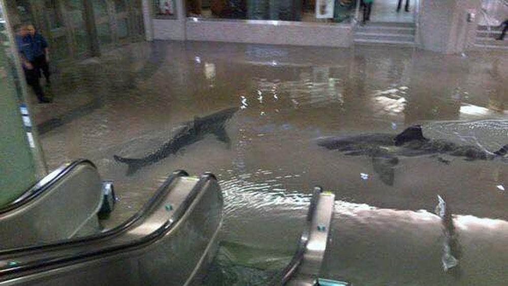 ハリケーン「マシュー」の脅威と、それに乗じて街中を泳ぎ回るサメの恐怖。