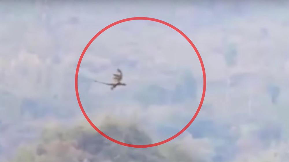 中国とラオスの国境付近で、本物の翼竜の映像が撮影された話。