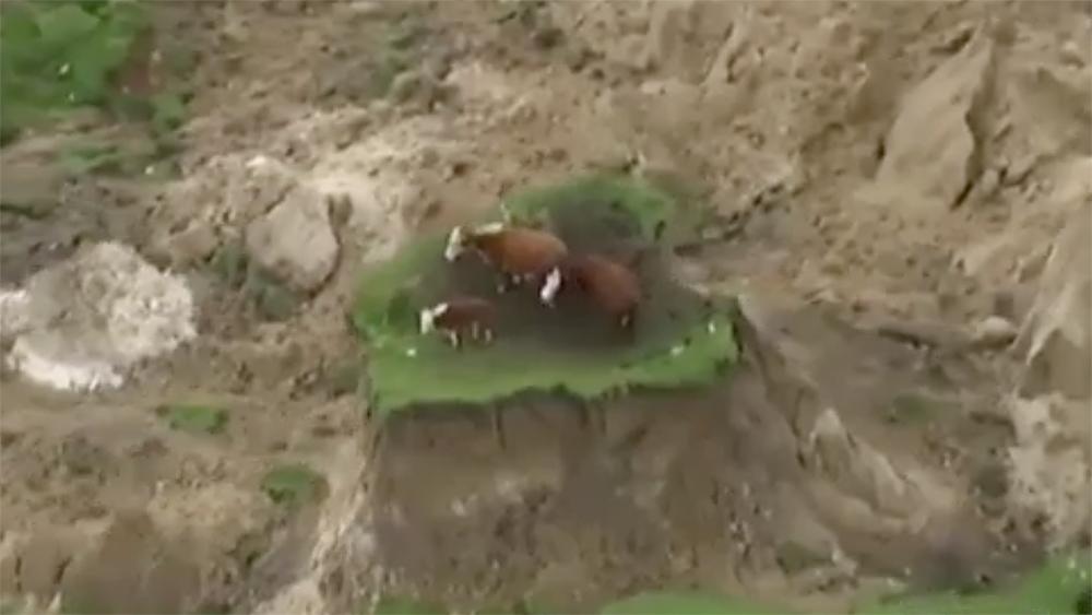 ニュージーランド地震で孤立状態となっているのは、決して人間たちだけではない。