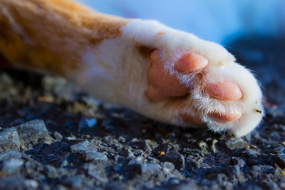 無題の猫の物語