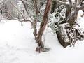 この縦走は疲れる 午前中は吹雪いていたが峠に出ると晴れ