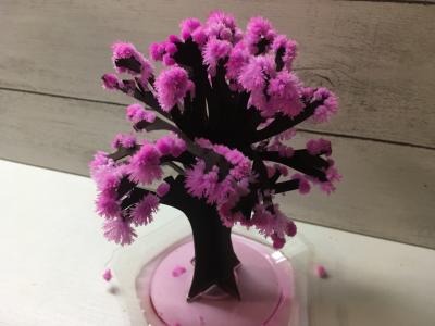 マジック桜の公式サイトはこちら⇒12時間で咲く不思議な桜 マジック桜      春は暖かくなるし、桜が咲いて彩りも出て季節の中で一番好き。    そんなあなたにとってもおすすめの「マジック桜」  ご存知ですか?    私もよく知らなかったのですが、海外の方へのお土産としても人気があるんだそうです。    高さ15cmくらい、幅は10cmくらいのもので、紙の枝に桜の花が満開になったように見えるインテリアです。    「まだ、どんなものか分からない、、、。」    そうですよね。  これだけだと確かに分からない。  そこで実際に作ってみましたので写真とともに、感想を書いていきますので、よかったら参考にしてください。    マジック桜とは?  happy-valentine.hatenablog.jp  商品の詳細はこちらからも確認してくださいね。    それでは早速開封してみたいと思います。    開けてみると、このセット。   左から本体が入った箱、咲かせ方&ポイントの説明書、マジック桜のパンフレットの3点。  パンフレットはパンフレットなので、実際使うのは左の2つ。  と言っても、本体の箱内部にも同じような説明が書いてあるので、一通りのことは分かります。  でも、よりきれいに咲かせようと思ったら、咲かせ方&ポイントの説明書があったほうが私はよかったです。    開封 & Let's花咲かじいさん  さっそく開封してみましょう。    中身はこの3つ。   左側からお皿、秘密の液、桜が咲く台紙。  お皿は弯曲していて凸ではなく、凹の形で使用します。    台紙の上のほうがほんのりピンクに染まっているのがポイントで、この色素を使って液の結晶が桜の花のように色付いていきます。    詳しくは説明書に書いてありますが、お皿に台紙を固定します。  差し込むだけなので簡単でした。    切り込みの入った台紙の枝を手で拡げて、説明書通りに秘密の液をかけると、これも説明書通り、枝がもとの形に戻ろうとします。    5分くらい置いておくと、さっそく結晶化が始まってしまうので、その前