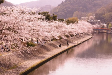 f:id:gigosyoku:20110410101030j:image