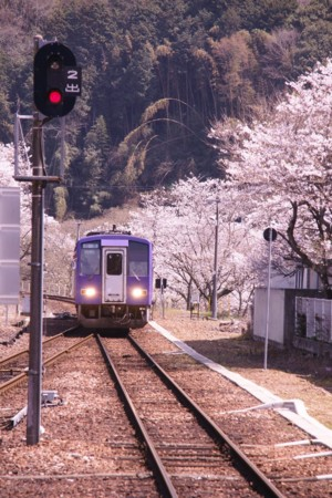 f:id:gigosyoku:20110410124733j:image