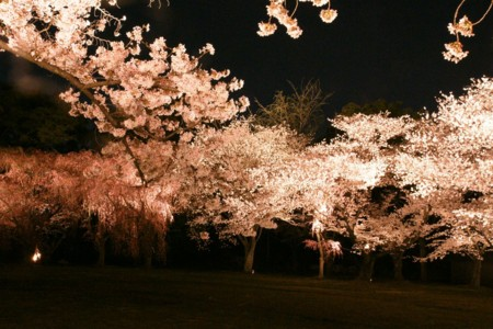 f:id:gigosyoku:20110410205758j:image