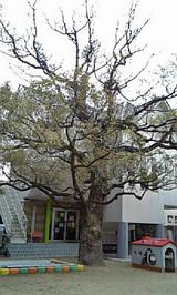 おおくすの木
