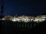 夜桜2008