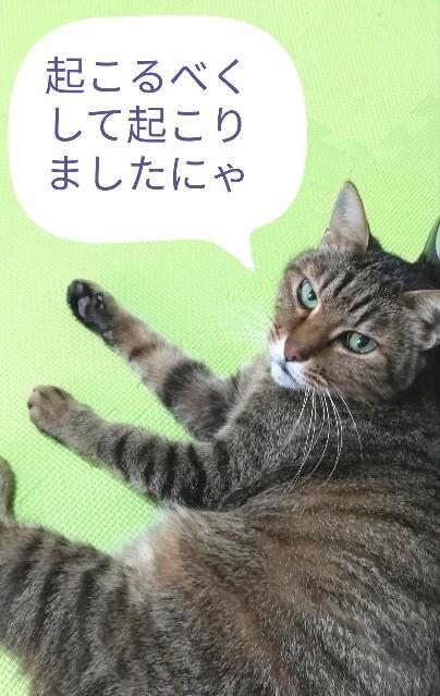 f:id:gin-huku:20191226172648j:image