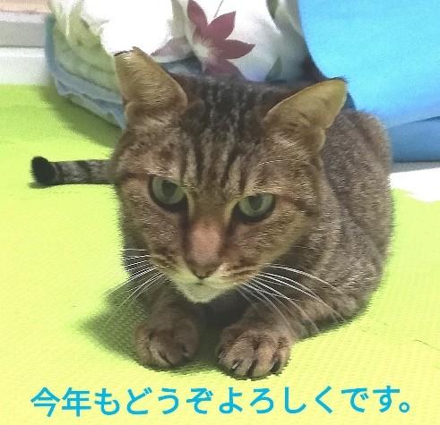 f:id:gin-huku:20200102193018j:image