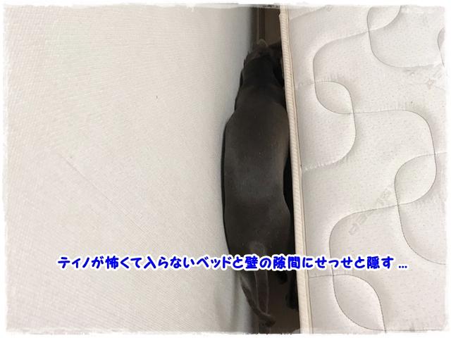 f:id:gino-ig:20170801000809j:plain