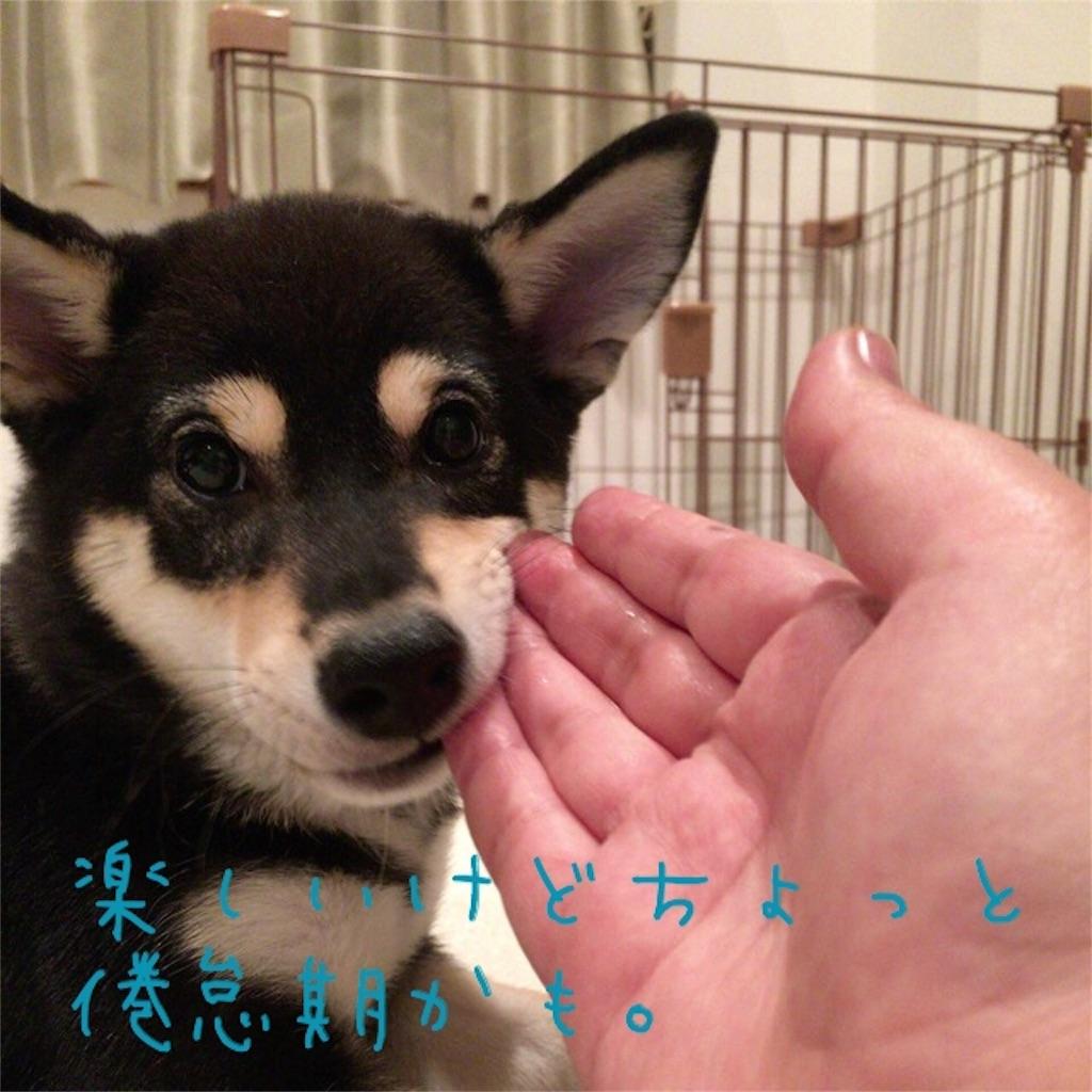 f:id:gizumiik:20160907201816j:image