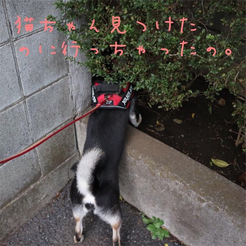 f:id:gizumiik:20161114173130j:image