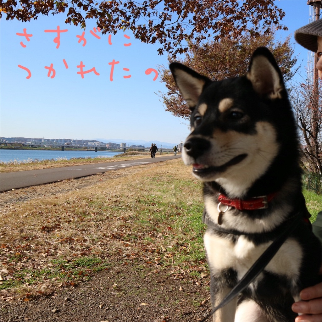 f:id:gizumiik:20161129172251j:image