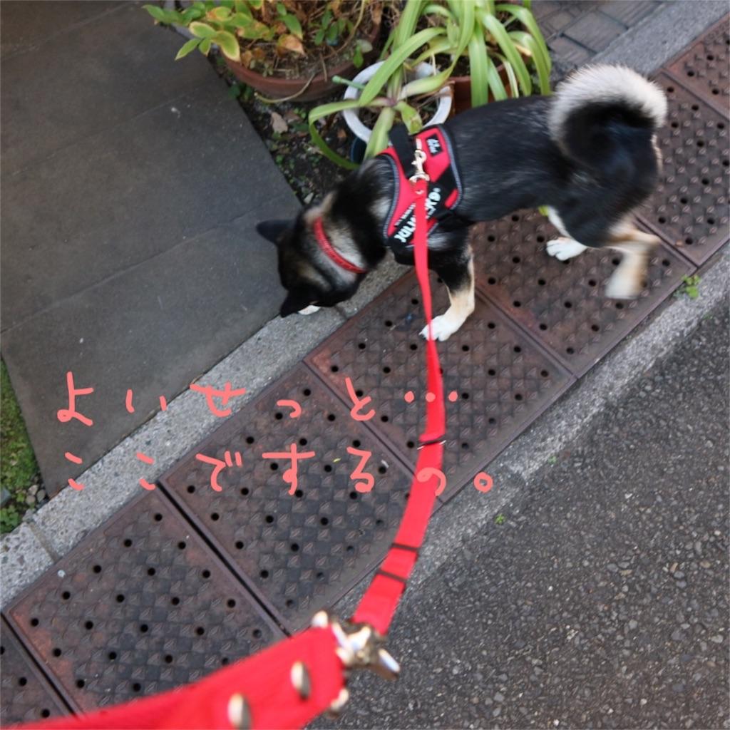f:id:gizumiik:20161217165147j:image