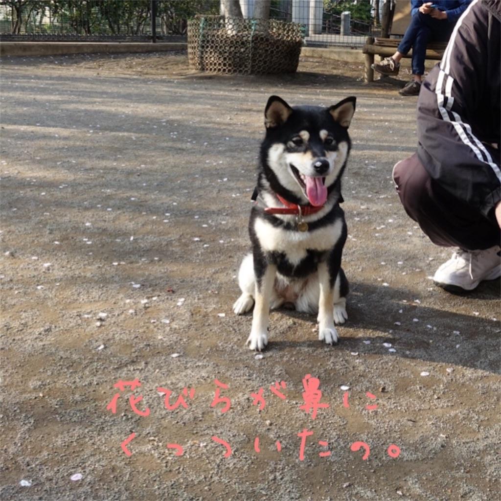 f:id:gizumiik:20170415012302j:image