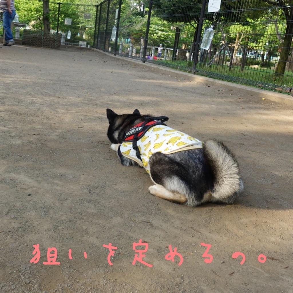 f:id:gizumiik:20170512003540j:image