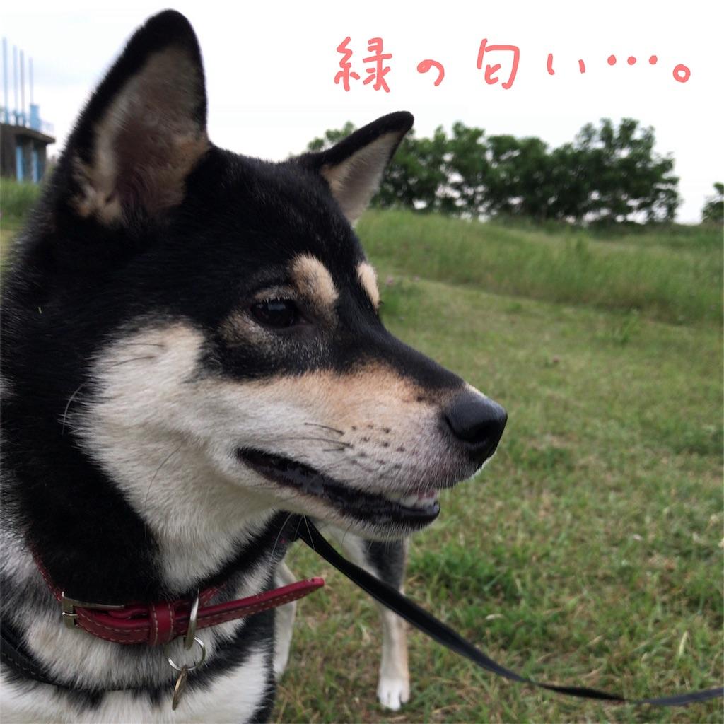 f:id:gizumiik:20170525193608j:image