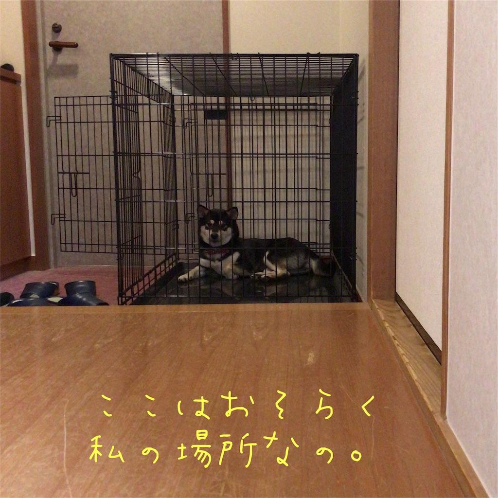 f:id:gizumiik:20170717143723j:image