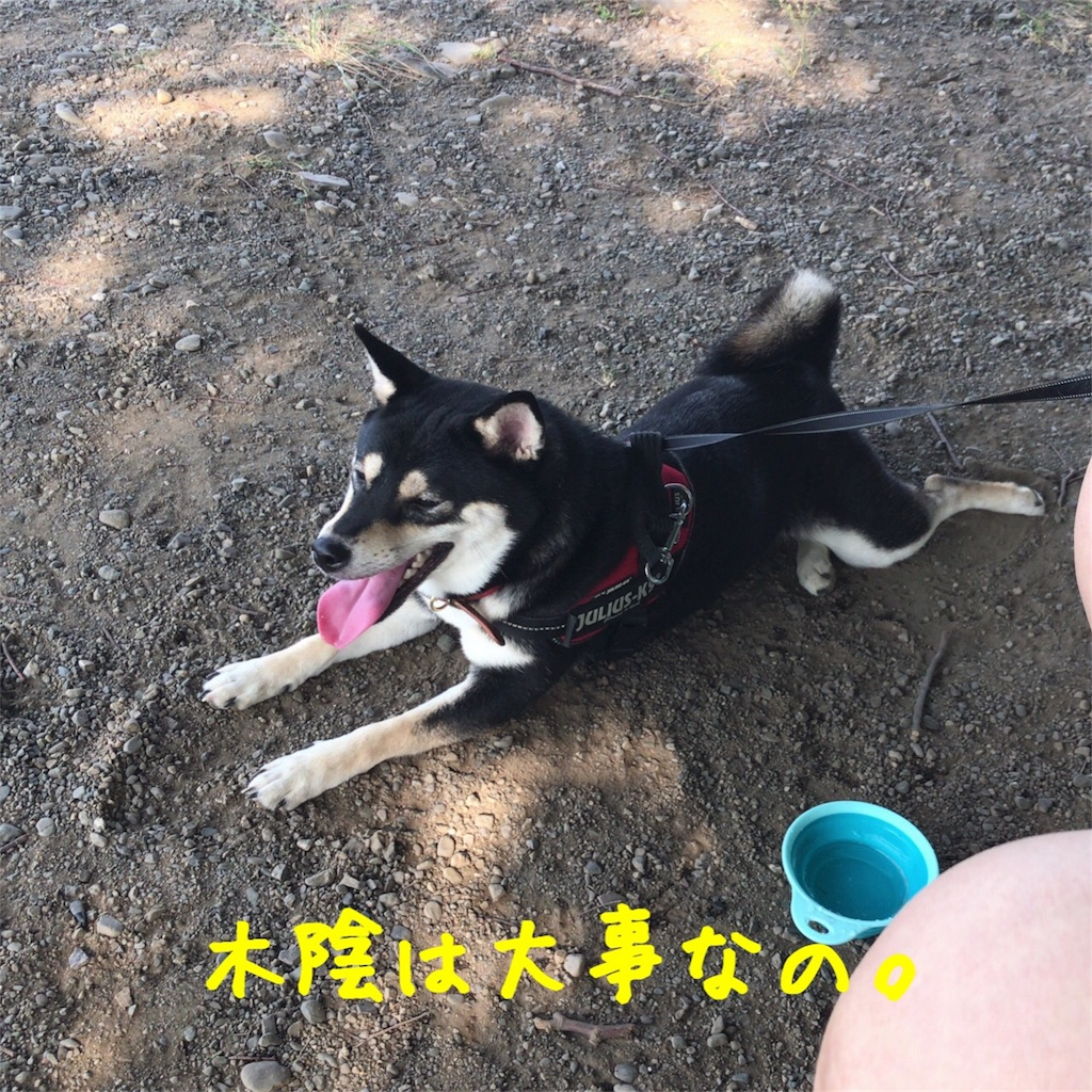 f:id:gizumiik:20170725182258j:image