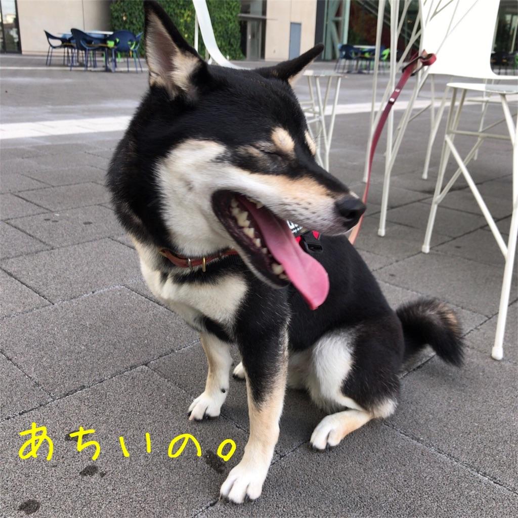 f:id:gizumiik:20170729174550j:image