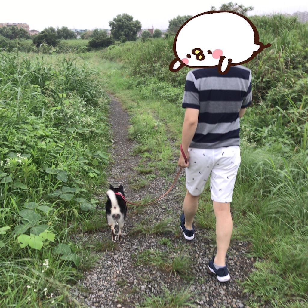 f:id:gizumiik:20170815125139j:image