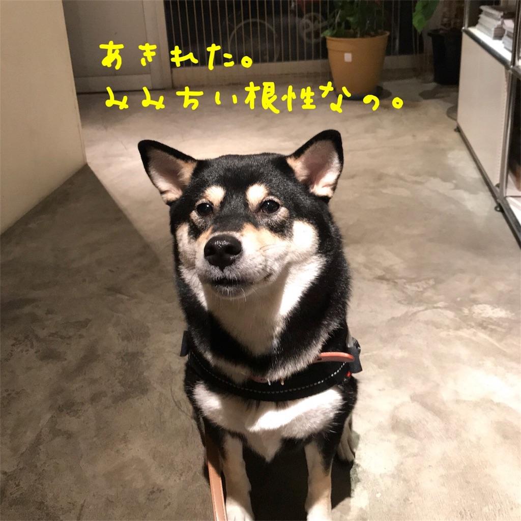 f:id:gizumiik:20171111202448j:image