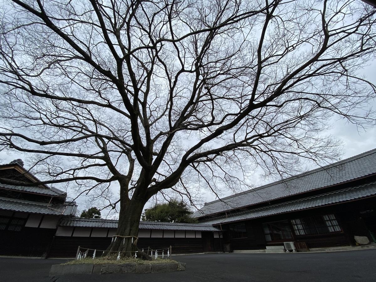f:id:gk-murai33-gk:20200216162620j:plain