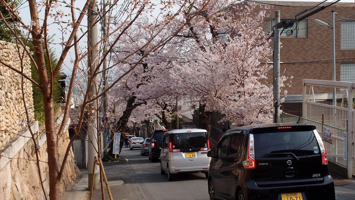 神戸の桜のトンネル