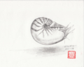 オウムガイ(鉛筆画の練習)