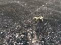 蟹の子供(3)