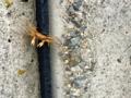 蟹の子供(1)