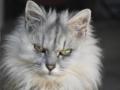 実家の猫さん