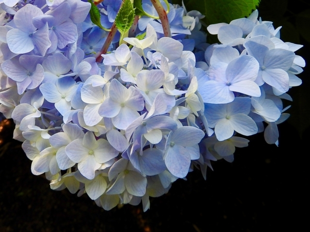 f:id:glasstic-blue:20170610161946j:image