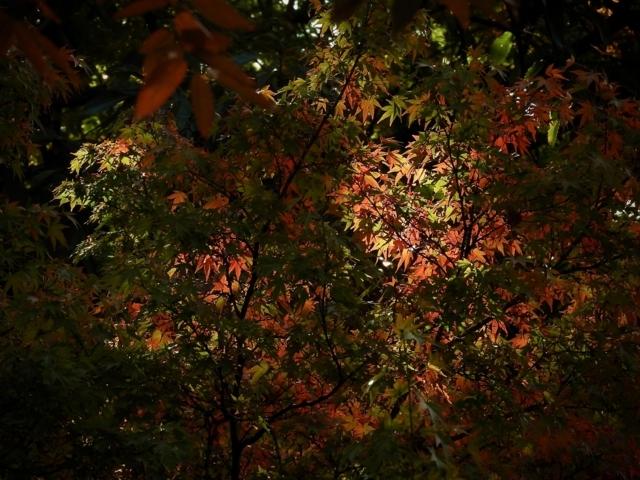 紅葉、ちいさい秋みつけた