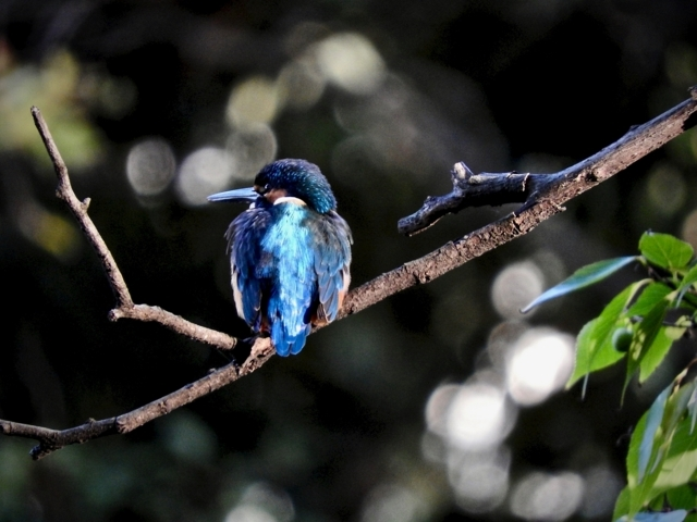 f:id:glasstic-blue:20171112153326j:image