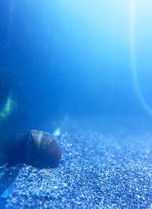 タタリ神的なコケから回復した石巻貝のマキちゃんの画像