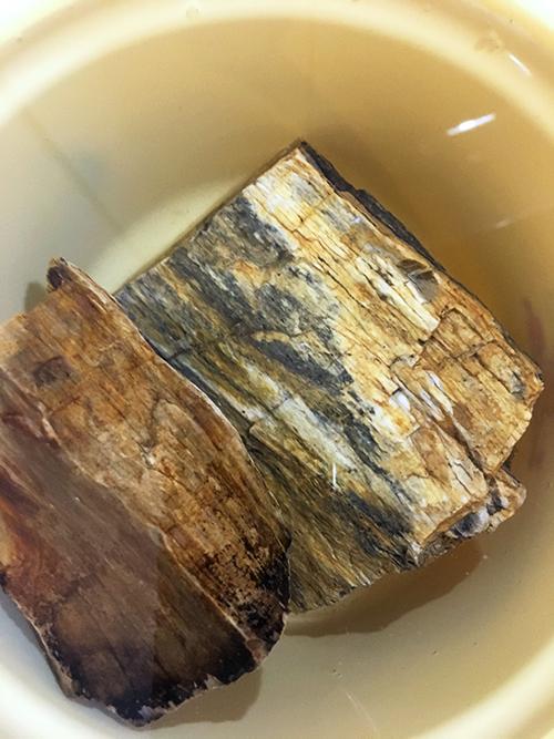 水に浸け置き中の木化石の画像