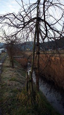 f:id:glucklich:20120121221138j:image