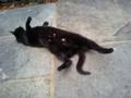 黒猫@オックスフォード Oxford