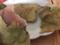 桜餅味のたい焼き@一口茶屋