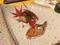 西京焼き、鮒寿司@三井寺 肴や ま喜の