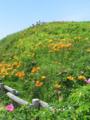 2011.07.03 小清水原生花園