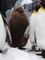 2020.02.16 旭山動物園