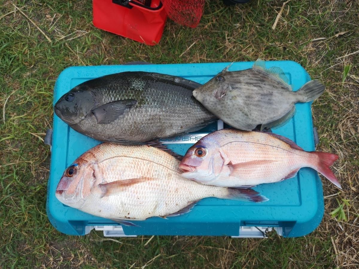 f:id:go_fishing2017:20190718212822j:plain